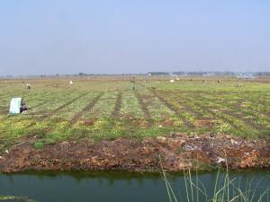 Ladang